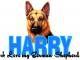 Harry German Shepherd